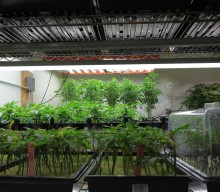 Nico's Nuggets: Cloning Plants Made Easy