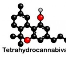 What Is THCV (Tetrahydrocannabivarin) And What Does It Do?
