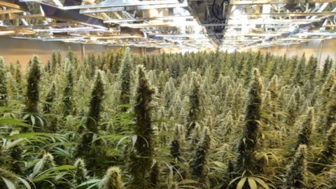 Hostile Buds: What Directors In The Cannabis Industry Need To Know About Takeover Bids