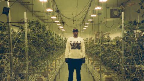 Viola Launches Cannabis Business Incubator Program with Gold Standard Farms