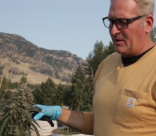 The 70-Tonne Outdoor Cannabis Harvest in BC