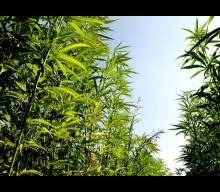 05-14-2019 – Cannabis News with Joe Klare