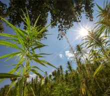 Minnesota Hemp Farmer Faces Charges for Alleged High THC Count