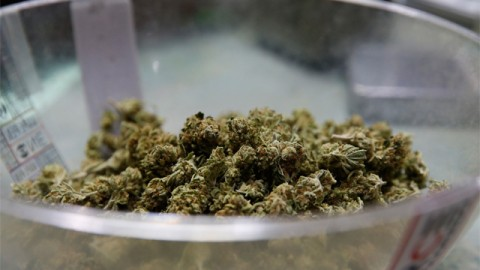 Lawmakers Say DEA Should Allow Researchers to Access State-Legal Marijuana