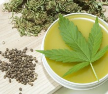 What Is the Highest CBD Strain of Cannabis? A Beginner's Guide